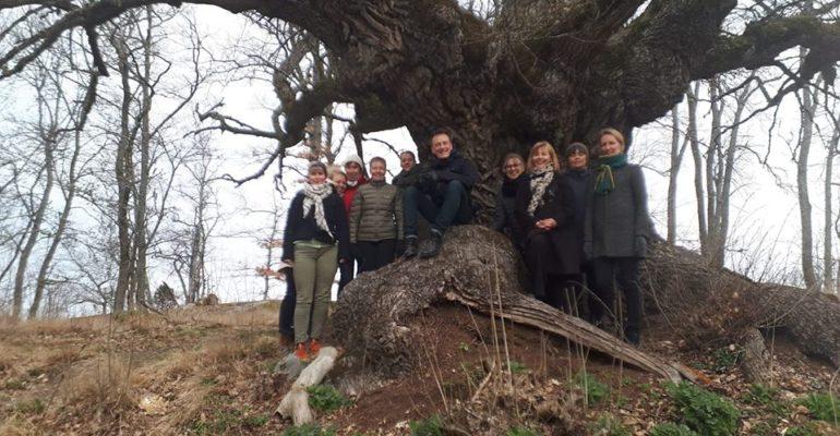 Flera Nordspråk-kurser planeras